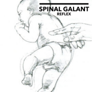 spinal-galant-reflex.png